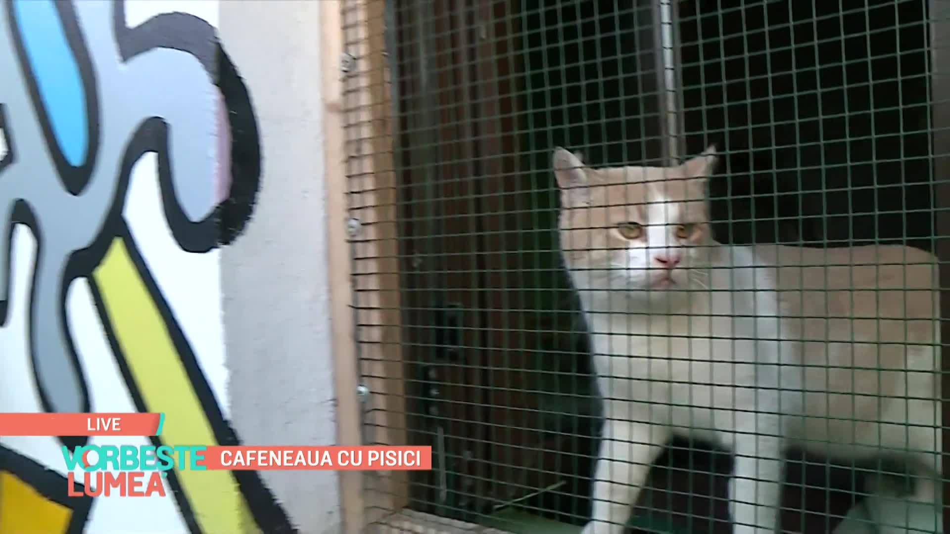 vbl180121_09_cafeneaua_cu_pisici